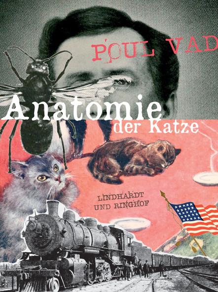 Anatomie der Katze