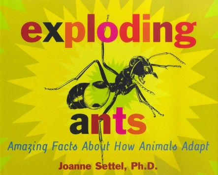Exploding Ants : Amazing Facts About How Animals Adapt
