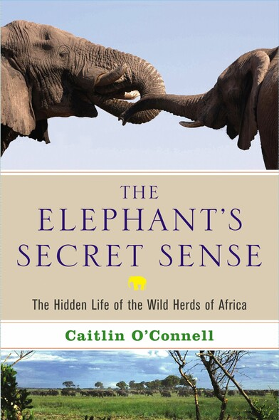 The Elephant's Secret Sense : The Hidden Life of the Wild Herds of Africa