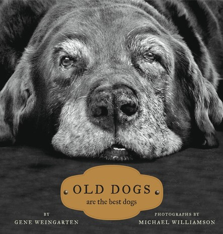 Old Dogs : Are the Best Dogs